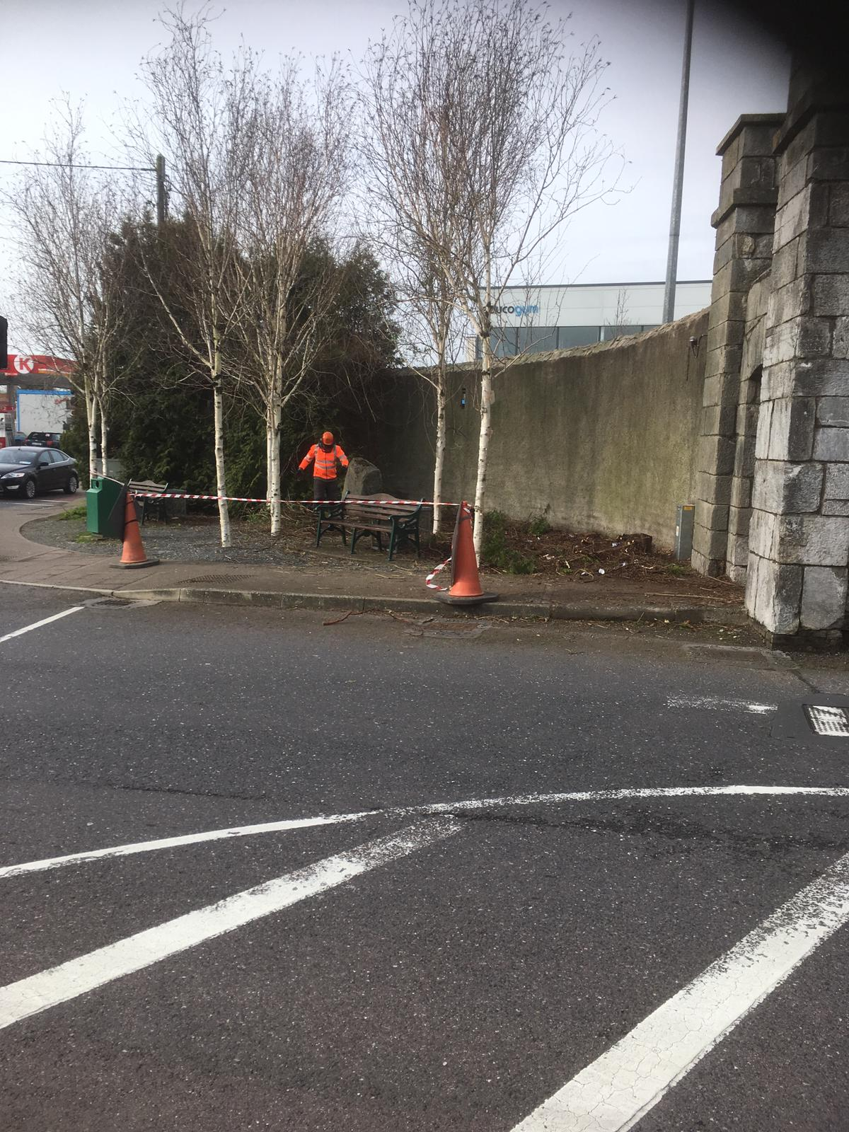 Eastgate Tree Removal 1