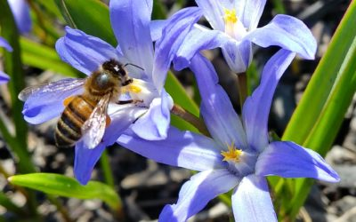 BEES – ARTICLE FROM THE GUARDIAN