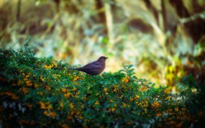 BIRD WATCH IRELAND ARTICLE