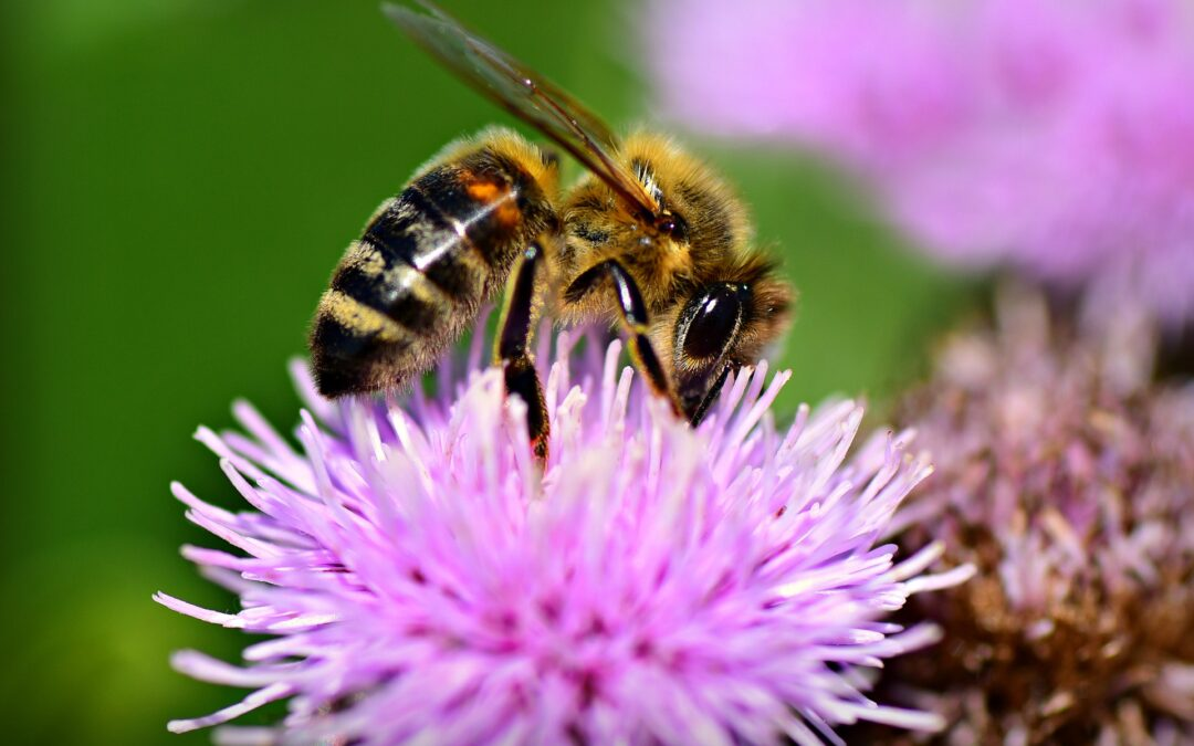 WORKING WITH FARMERS TO HELP POLLINATORS